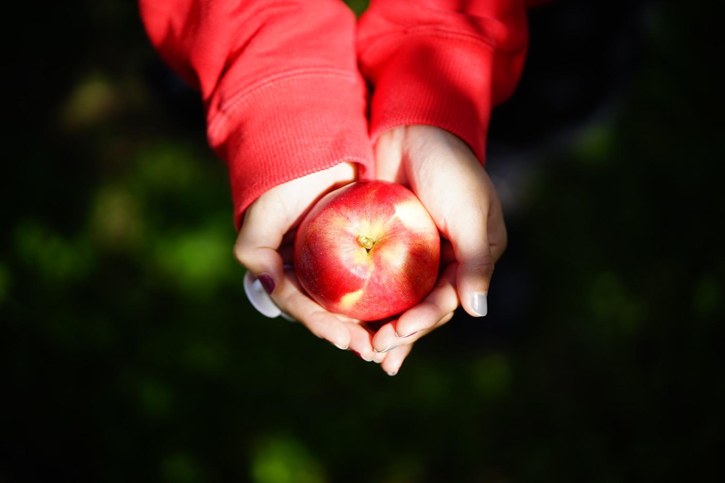 リンゴ農家さん向けキービジュアル